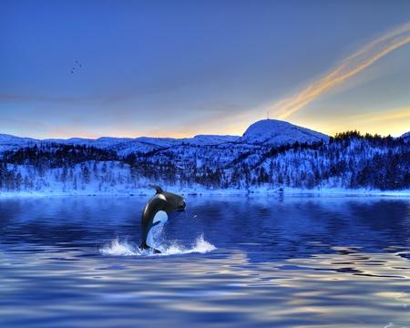 ballena azul: Orca