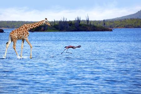Giraffe and flamingo Stock Photo - 8685081