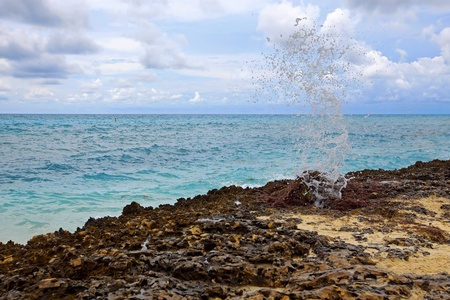 orificio nasal: Un espir�culo haciendo agua en Aruba, Caribe