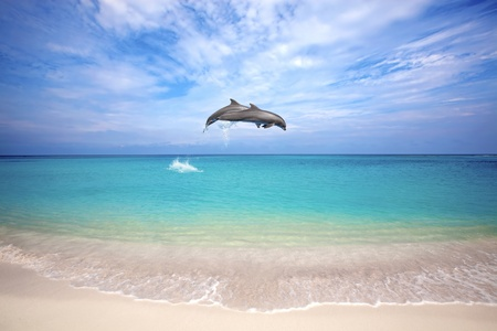 Two dolphins jumping in the Caribbean sea Stock Photo