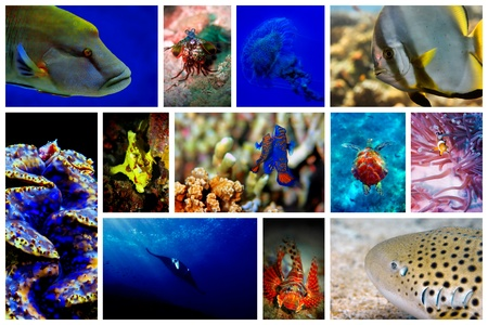 napoleon wrasse: Collage of the colorful underwater life in Asia Stock Photo