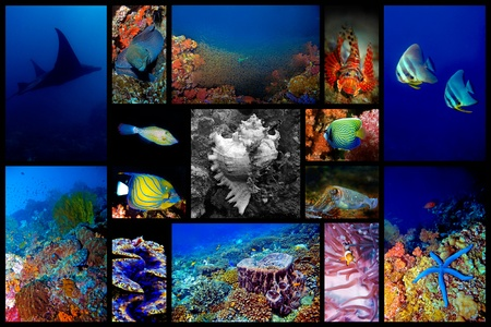 Collage of the colorful underwater life in Asia Stock Photo