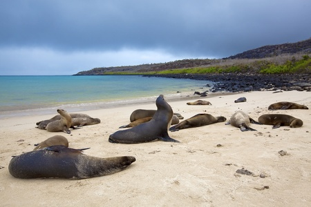 Sea lion colony on Santa Fe island, Galapagos photo