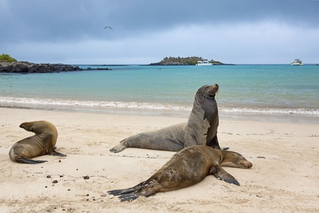 colonies: Sea lion colony Stock Photo