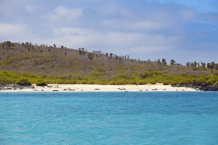 fe: Sea lion colony on Santa Fe island, Galapagos
