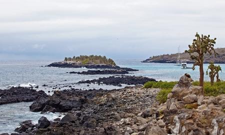 galapagos: View over cacti and weathered cliffs at Barrington Bay, Galapagos