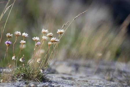 flores secas: Primer plano de flores que crecen en las rocas de segunda mano