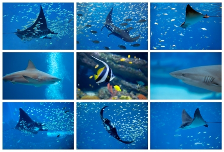 Collage of the colorful underwater life in Asia Stock Photo - 17922860