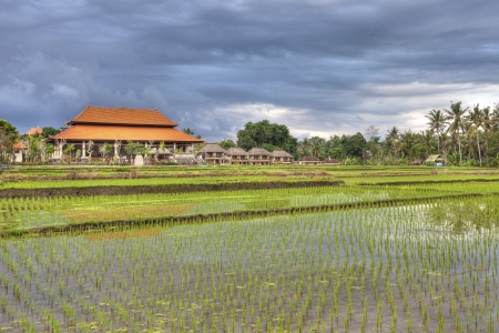 Sunset and rice fields in the small town of Ubud, Bali Stock Photo - 20619418