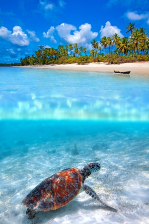 Green sea turtle and tropical beach above and below water photo