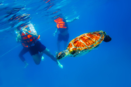similan islands: Green Sea Turtle in blue ocean at Similan Islands