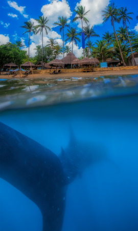Tropical island and whale shark - above and below water photo