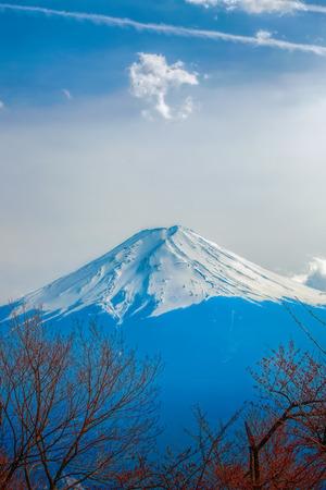 mt fuji: Mt Fuji and Cherry Blossoms at lake Kawaguchi