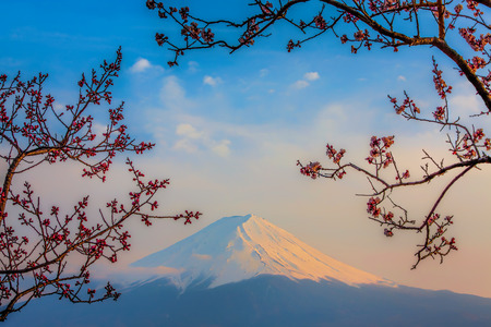 tokyo sky tree: Mt Fuji and Cherry Blossoms at lake Kawaguchi
