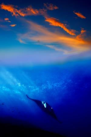 Manta ray in the sunset at Manta point Bali photo