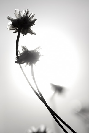 shallow dof: Artistic silhouette of flowers against the sun - shallow DOF