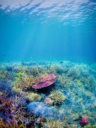 fondali marini: Subacqueo barriera corallina