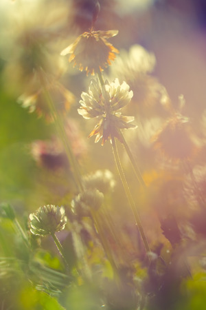 natural  moody: Vintage flowers Stock Photo