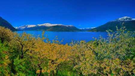 hardangerfjord: Blossoming season and mountains in Hardangerfjord in Norway Stock Photo