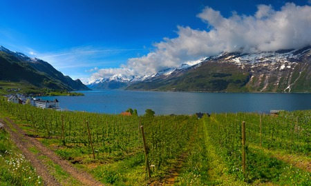 Blossoming season and mountains in Hardangerfjord in Norway Stock Photo