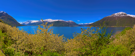 hardanger: Blossoming season and mountains in Hardangerfjord in Norway Stock Photo