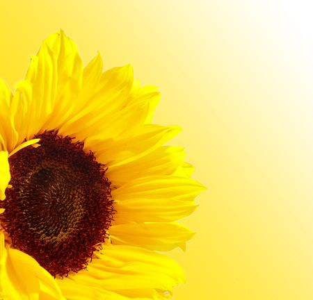 Sunflower Stock Photo - 237310