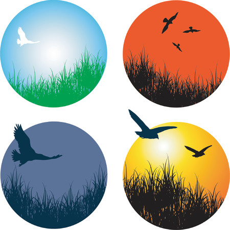 Landscapes with birds - vector Vector