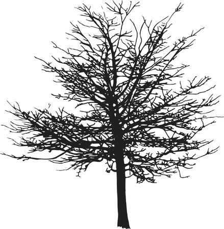 fall winter: Winter tree - vector