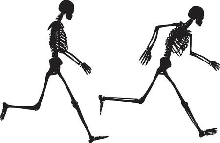 finger bones: Running skeletons - vector