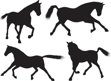 foal: Horse silhouettes - vector