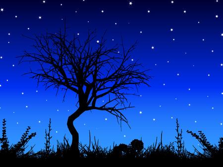 cielo estrellado: �rbol silueta contra el cielo estrellado - vector