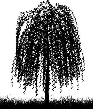 Silhouette z płaczem wierzba drzewo