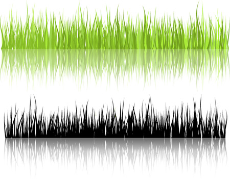 Grass illustrations with reflections Illustration