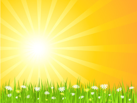 Sunny sky with daisies in grass Vector