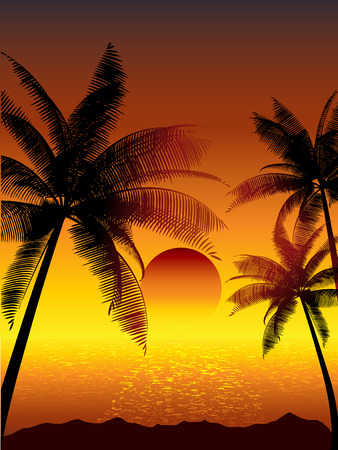 beach sunset: Tropical sunset with palm trees