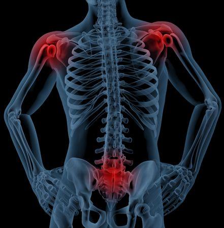 human joint: 3D render of medical skeleton highlighting joints
