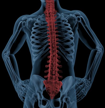 Medical skeleton with the spin highlighted photo
