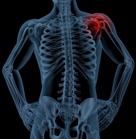 3D render of a medical skeleton with the shoulder joint highlighted Stock Photo - 7996208