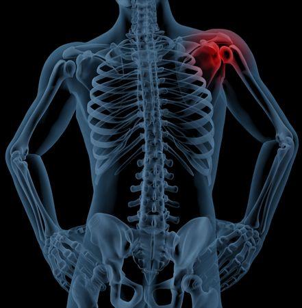3d bone: 3D render of a medical skeleton with the shoulder joint highlighted