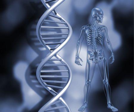 3D render of a medical skeleton stood next to DNA strands photo