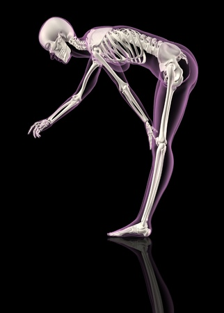 rib cage: 3D render of a female skeleton bending over