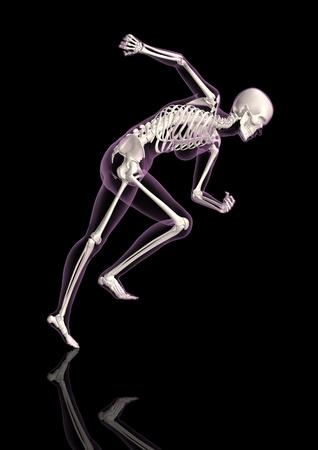 scheletro umano: Il rendering 3D di uno scheletro femmina medico in una posa in esecuzione