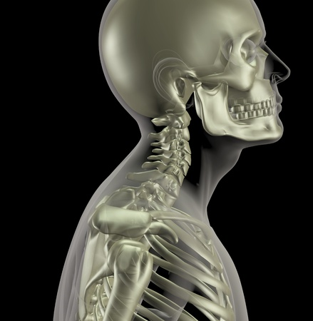 neck: 3D render of a male medical skeleton with a close up of the neck bones