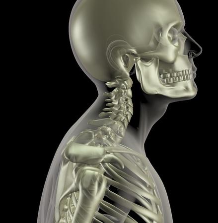 the neck: 3D rendering di uno scheletro di mediche maschio con una stretta le ossa del collo