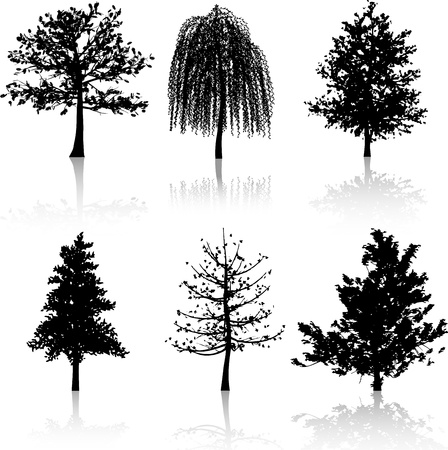 weeping willow tree: Collection of six different tree silhouettes with reflections