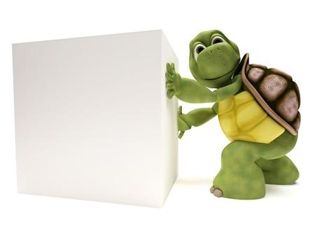 tortuga: Render 3D de una tortuga con un signo de blanco en blanco Foto de archivo