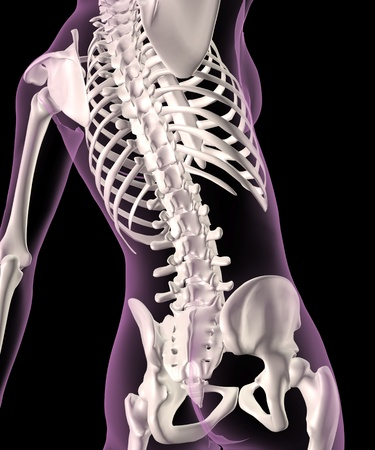 rib cage: 3D render of a female medical skeleton with a close up of the spine Stock Photo