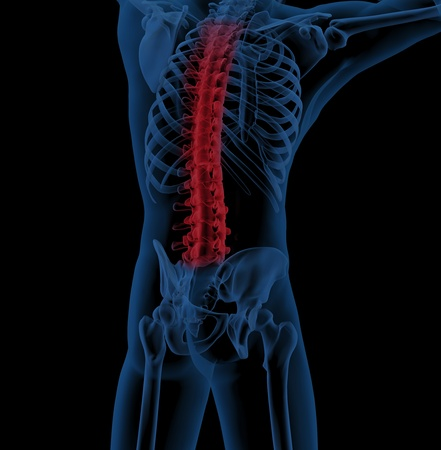 3D render of a male medical skeleton with the spine highlighted indicating back pain Stock Photo - 9226657