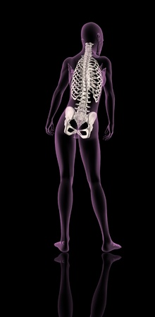 3D render of a female medical skeleton showing rib cage, spine and hip bone Stock Photo - 9274542