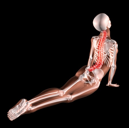 squelette humain: 3d render of a female medical skeleton stretching her back